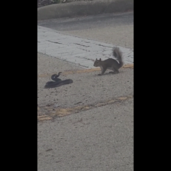 Squirrel Takes On A Dangerous Snake!